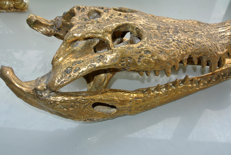 50 Cm Long Large Crocodile Skull On Black Stand Solid