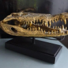 50 cm long large Crocodile skull on black stand solid brass large heavy decoration stunning hand made statue head jaw teeth